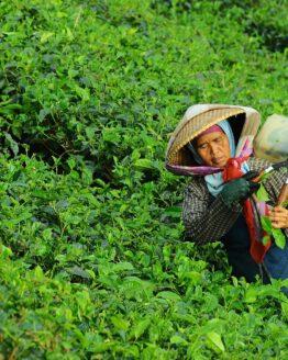 Tee Räumungsverkauf